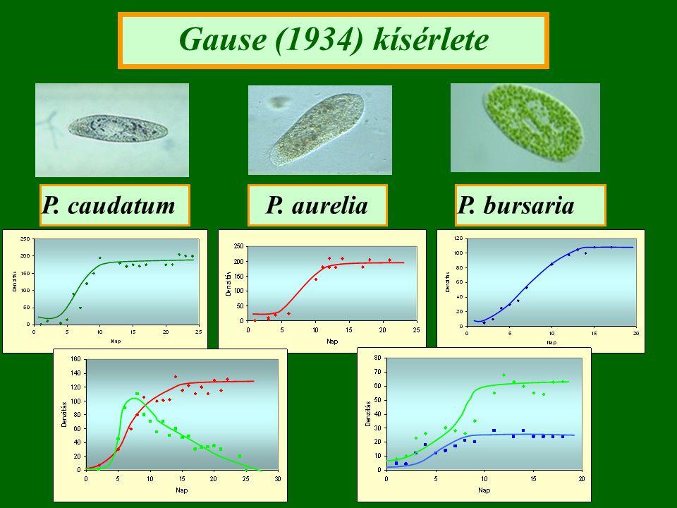 Gause (1934) kísérlete P. caudatumP. aureliaP. bursaria