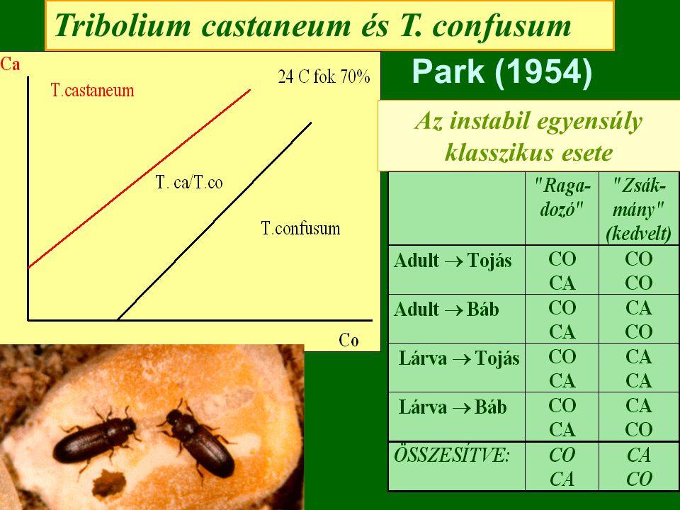 Tribolium castaneum és T. confusum Park (1954) Az instabil egyensúly klasszikus esete
