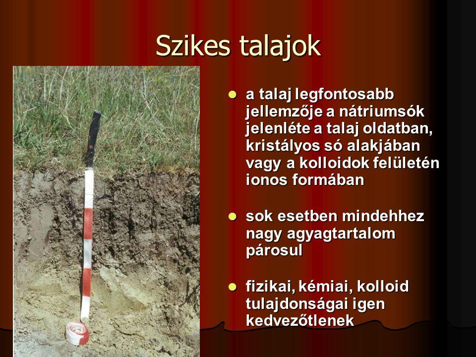 a talaj legfontosabb jellemzője a nátriumsók jelenléte a talaj oldatban, kristályos só alakjában vagy a kolloidok felületén ionos formában a talaj leg