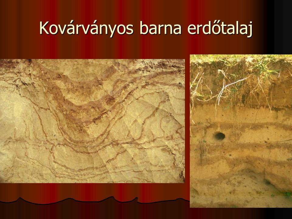 Kovárványos barna erdőtalaj