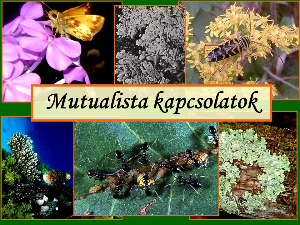 Példák a mutualizmusra