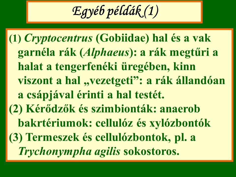"""Egyéb példák (1) (1) Cryptocentrus (Gobiidae) hal és a vak garnéla rák (Alphaeus): a rák megtűri a halat a tengerfenéki üregében, kinn viszont a hal """""""