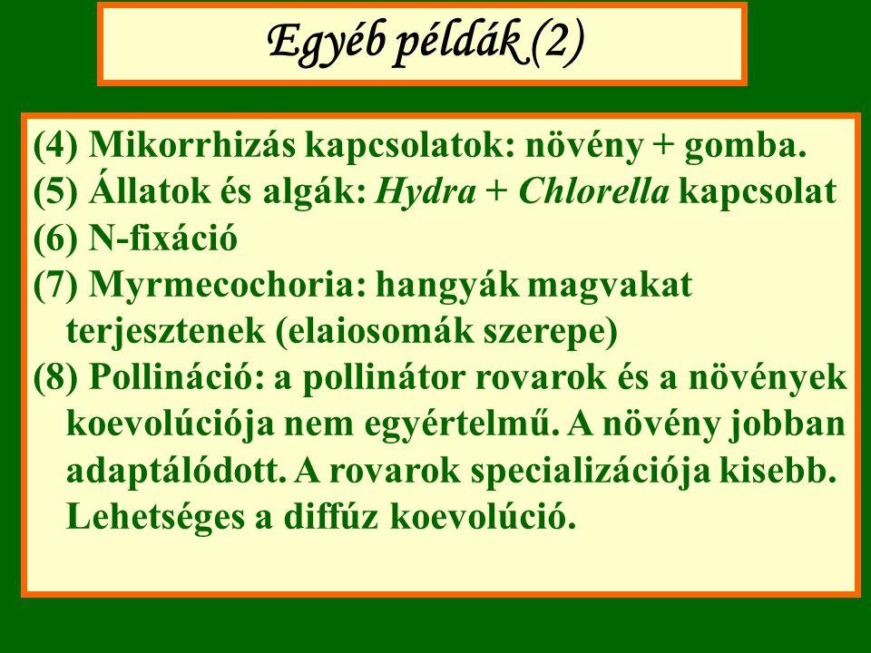 Egyéb példák (2) (4) Mikorrhizás kapcsolatok: növény + gomba. (5) Állatok és algák: Hydra + Chlorella kapcsolat (6) N-fixáció (7) Myrmecochoria: hangy
