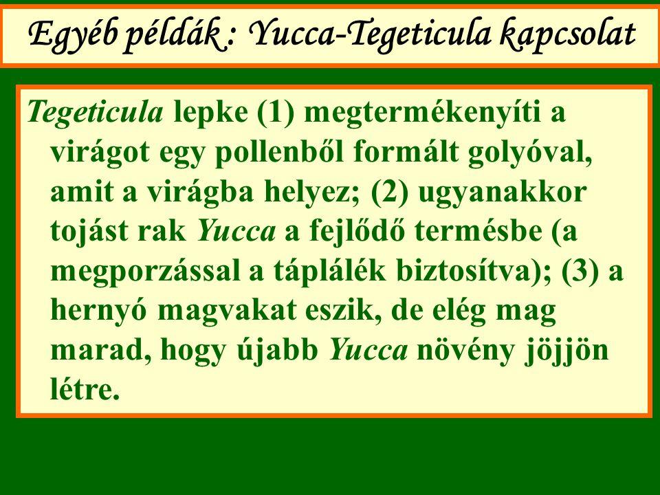 Egyéb példák : Yucca-Tegeticula kapcsolat Tegeticula lepke (1) megtermékenyíti a virágot egy pollenből formált golyóval, amit a virágba helyez; (2) ug
