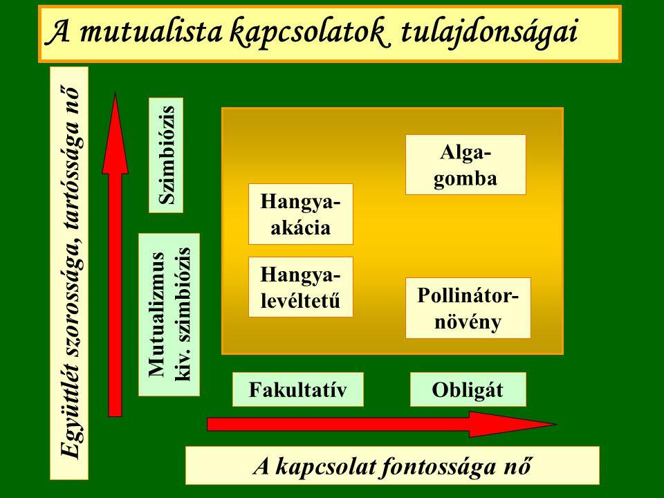 A kapcsolat fontossága nő Együttlét szorossága, tartóssága nő Szimbiózis A mutualista kapcsolatok tulajdonságai Mutualizmus kiv. szimbiózis ObligátFak