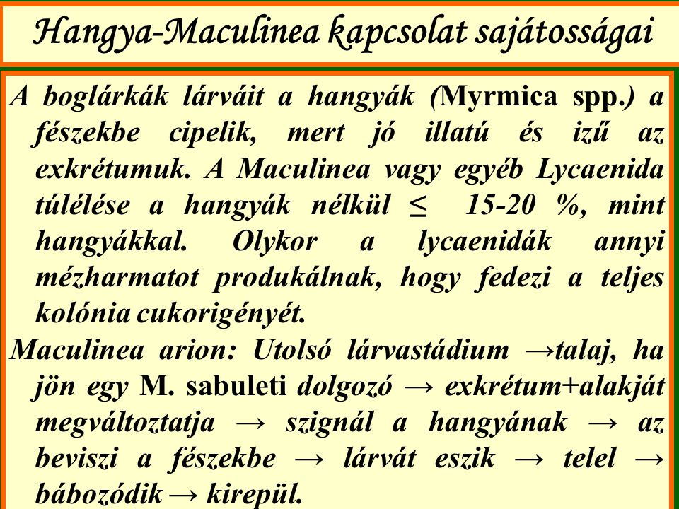 Hangya-Maculinea kapcsolat sajátosságai A boglárkák lárváit a hangyák (Myrmica spp.) a fészekbe cipelik, mert jó illatú és izű az exkrétumuk. A Maculi