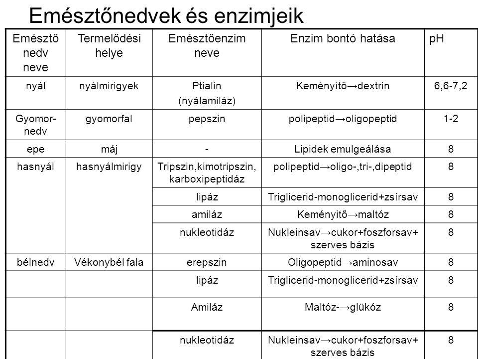 Emésztőnedvek és enzimjeik Emésztő nedv neve Termelődési helye Emésztőenzim neve Enzim bontó hatásapH nyálnyálmirigyekPtialin (nyálamiláz) Keményítő→d