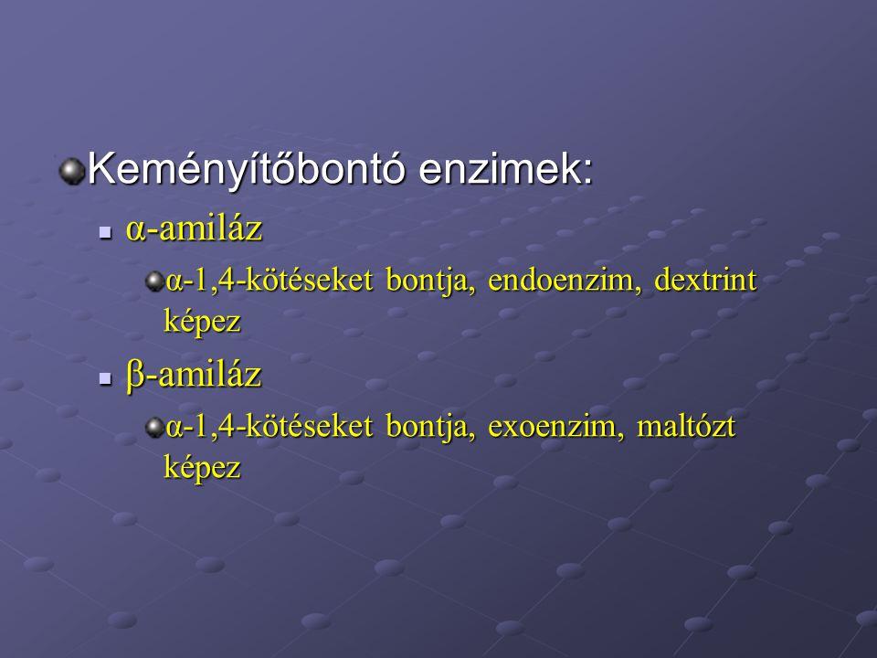 Keményítőbontó enzimek: α-amiláz α-amiláz α-1,4-kötéseket bontja, endoenzim, dextrint képez β-amiláz β-amiláz α-1,4-kötéseket bontja, exoenzim, maltóz