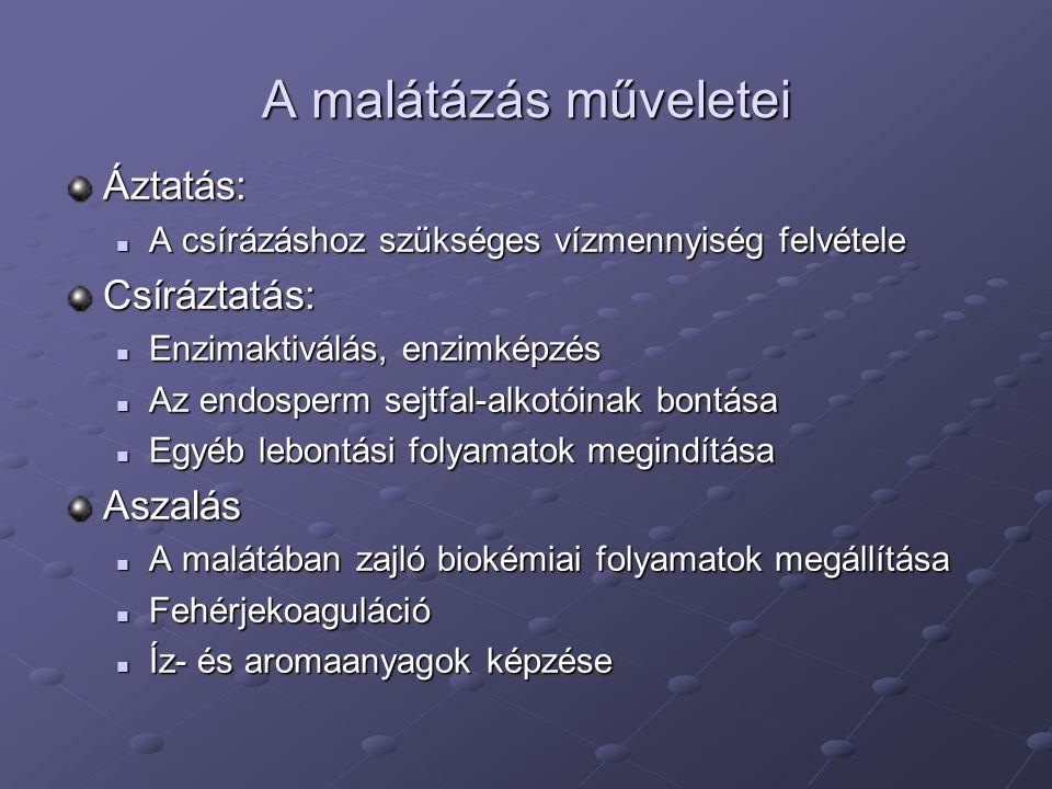 A malátázás műveletei Áztatás: A csírázáshoz szükséges vízmennyiség felvétele A csírázáshoz szükséges vízmennyiség felvételeCsíráztatás: Enzimaktiválá