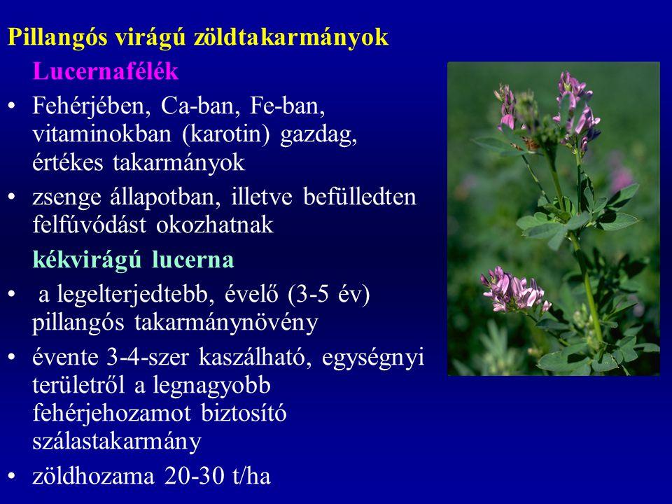 Pillangós virágú zöldtakarmányok Lucernafélék Fehérjében, Ca-ban, Fe-ban, vitaminokban (karotin) gazdag, értékes takarmányok zsenge állapotban, illetv