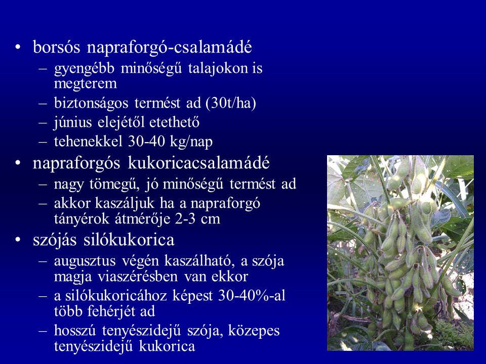 borsós napraforgó-csalamádé –gyengébb minőségű talajokon is megterem –biztonságos termést ad (30t/ha) –június elejétől etethető –tehenekkel 30-40 kg/n