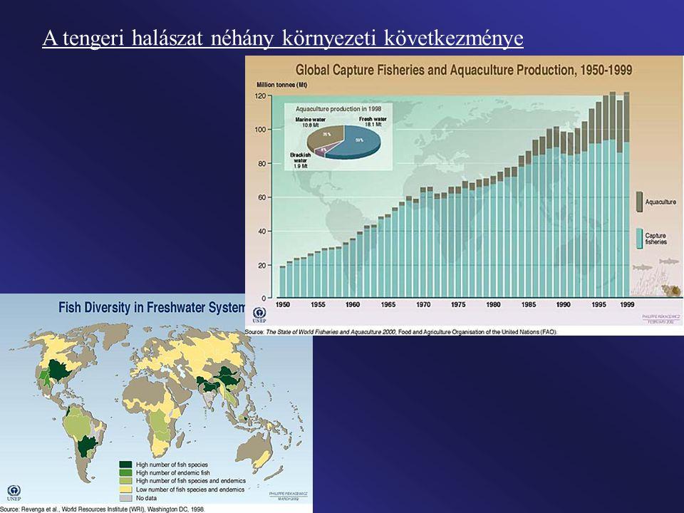 1996-ban megalakult a Víz Világtanács (amely évente áttekinti a legfontosabb feladatokat), majd ennek kezdeményezésére háromévenkénti gyakorisággal életre hívták a Víz Világfórumokat.