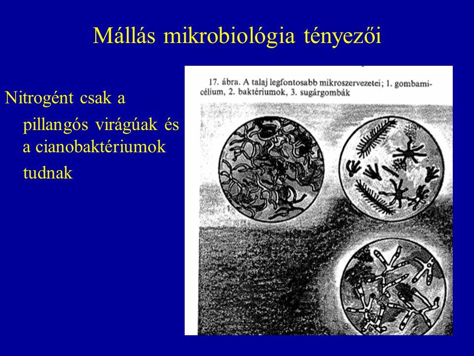 Mállás mikrobiológia tényezői Nitrogént csak a pillangós virágúak és a cianobaktériumok tudnak