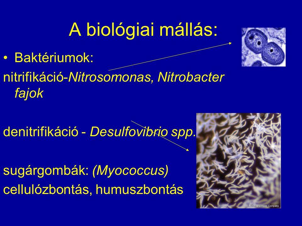 A biológiai mállás: Baktériumok: nitrifikáció-Nitrosomonas, Nitrobacter fajok denitrifikáció - Desulfovibrio spp. sugárgombák: (Myococcus) cellulózbon