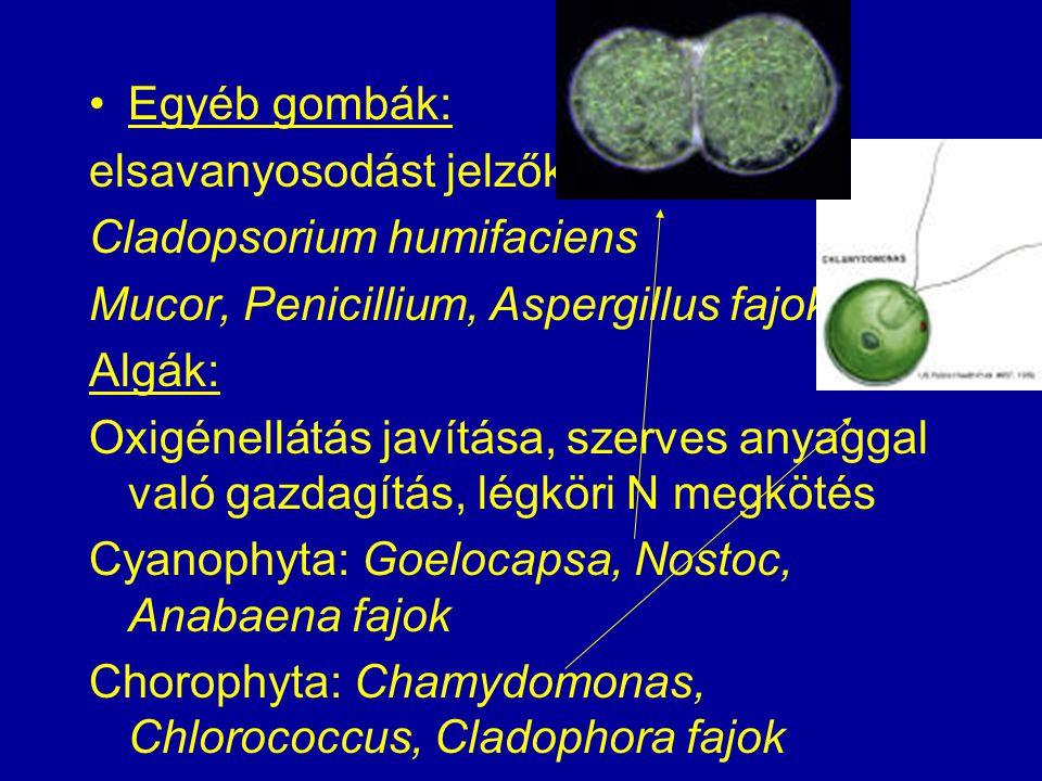 Egyéb gombák: elsavanyosodást jelzők Cladopsorium humifaciens Mucor, Penicillium, Aspergillus fajok Algák: Oxigénellátás javítása, szerves anyaggal va