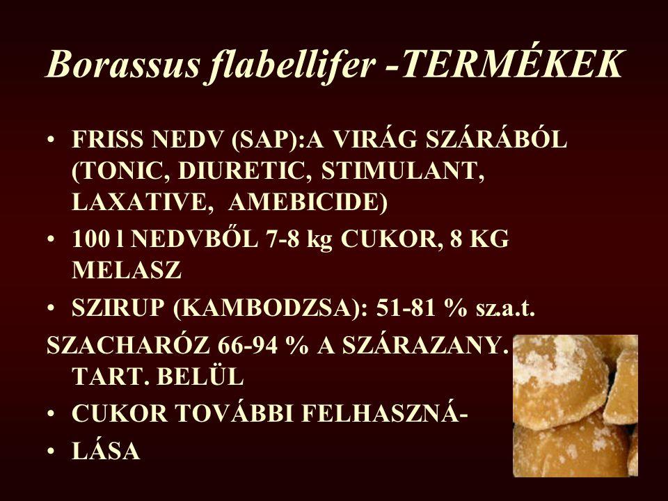 Borassus flabellifer -TERMÉKEK FRISS NEDV (SAP):A VIRÁG SZÁRÁBÓL (TONIC, DIURETIC, STIMULANT, LAXATIVE, AMEBICIDE) 100 l NEDVBŐL 7-8 kg CUKOR, 8 KG ME