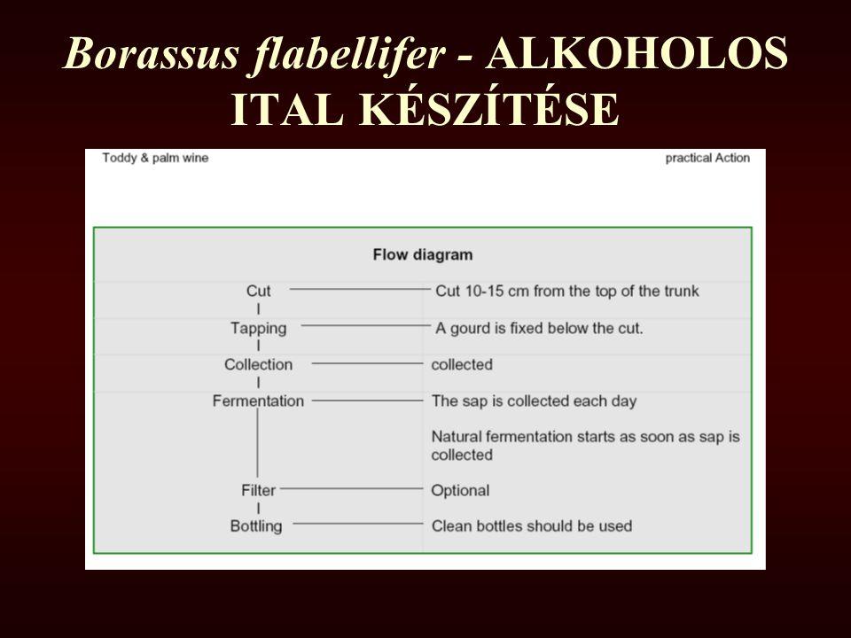 Borassus flabellifer - ALKOHOLOS ITAL KÉSZÍTÉSE