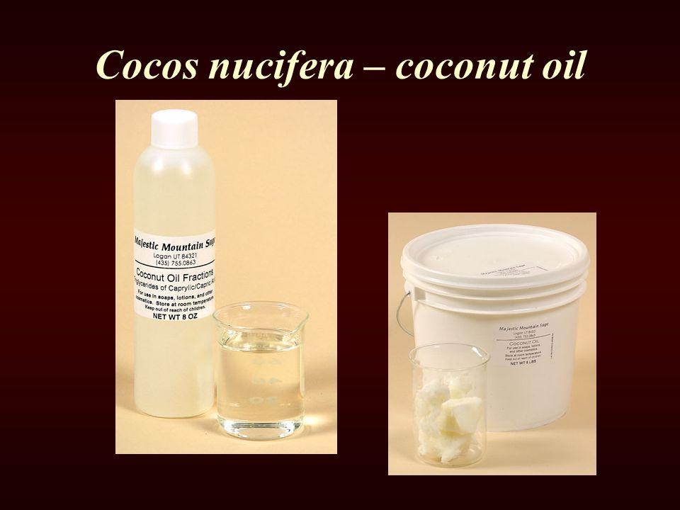 Cocos nucifera – coconut oil