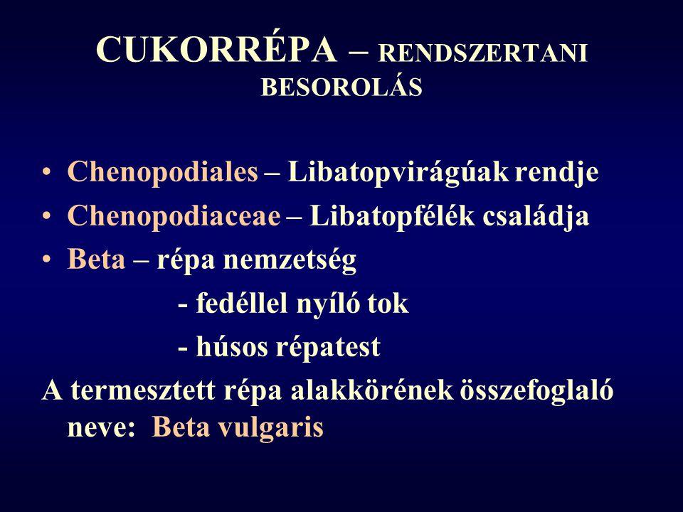CUKORRÉPA – RENDSZERTANI BESOROLÁS Chenopodiales – Libatopvirágúak rendje Chenopodiaceae – Libatopfélék családja Beta – répa nemzetség - fedéllel nyíló tok - húsos répatest A termesztett répa alakkörének összefoglaló neve: Beta vulgaris