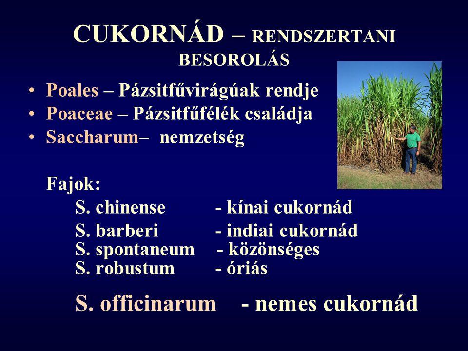 CUKORNÁD – RENDSZERTANI BESOROLÁS Poales – Pázsitfűvirágúak rendje Poaceae – Pázsitfűfélék családja Saccharum– nemzetség Fajok: S.