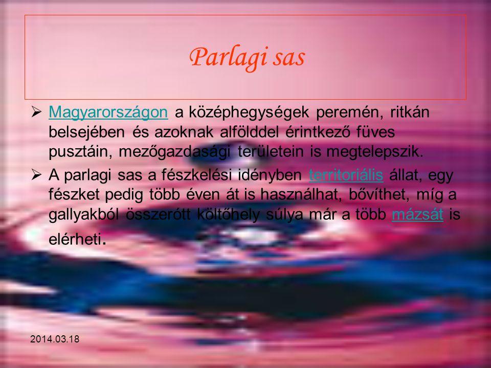 2014.03.18 Parlagi sas  Magyarországon a középhegységek peremén, ritkán belsejében és azoknak alfölddel érintkező füves pusztáin, mezőgazdasági terül