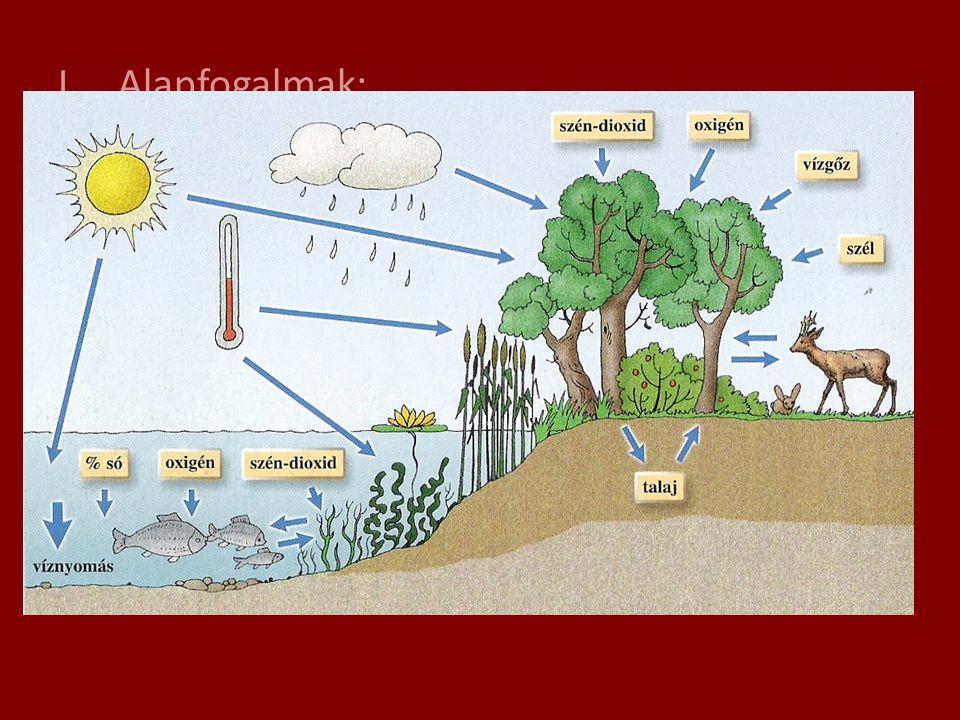 I.Alapfogalmak: 1.) Környezeti tényezők: a.) élettelen: pl: vízi élettérben: fény, hőmérséklet, víznyomás, sókoncent- ráció, szén-dioxid- és oxigén- e