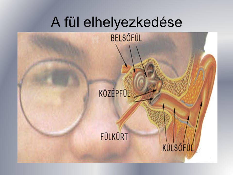 A belső fülben (labirintus) található a hallás és egyensúlyozás érzéksejt-rendszere; A csiga és az egyensúlyozás szerve/ tömlőcske-zsákocska- három félkörös ívjárat/ A belső fület folyadéktér veszi körül.