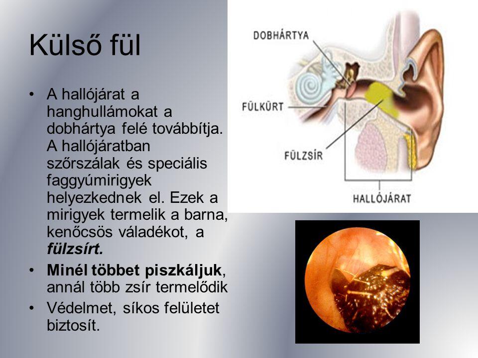 Egyensúlyérzékelő-szerv felépítése