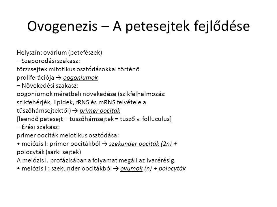 Ovogenezis – A petesejtek fejlődése Helyszín: ovárium (petefészek) – Szaporodási szakasz: törzssejtek mitotikus osztódásokkal történő proliferációja → oogoniumok – Növekedési szakasz: oogoniumok méretbeli növekedése (szikfelhalmozás: szikfehérjék, lipidek, rRNS és mRNS felvétele a tüszőhámsejtektől) → primer oociták [leendő petesejt + tüszőhámsejtek = tüsző v.