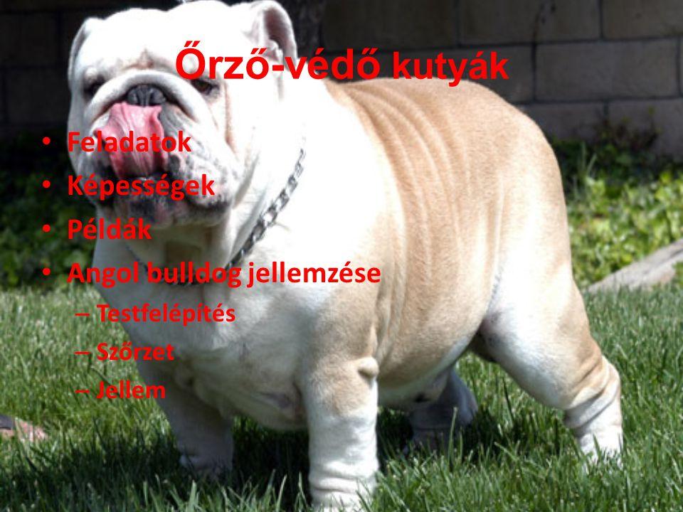 Őrző-védő kutyák Feladatok Képességek Példák Angol bulldog jellemzése – Testfelépítés – Szőrzet – Jellem