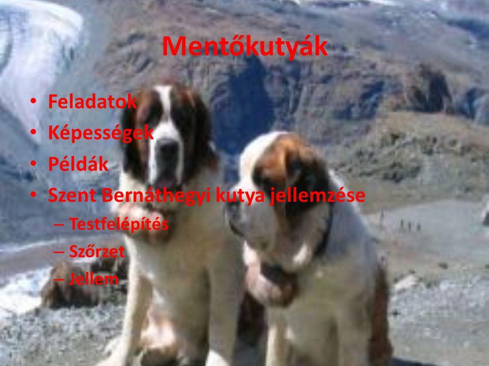 Mentőkutyák Feladatok Képességek Példák Szent Bernáthegyi kutya jellemzése – Testfelépítés – Szőrzet – Jellem