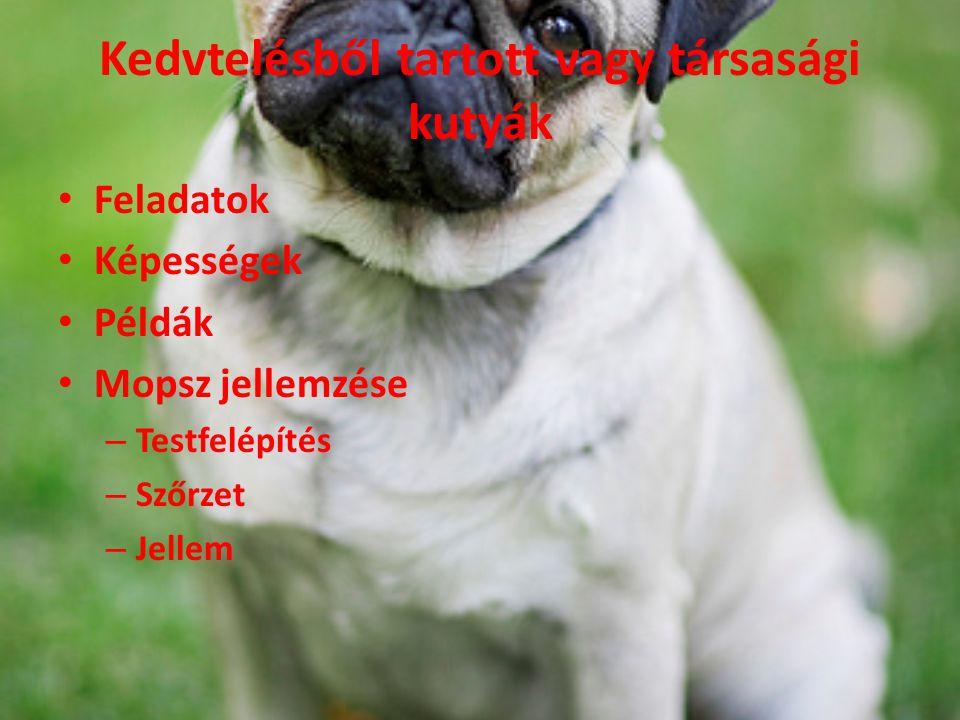 Kedvtelésből tartott vagy társasági kutyák Feladatok Képességek Példák Mopsz jellemzése – Testfelépítés – Szőrzet – Jellem