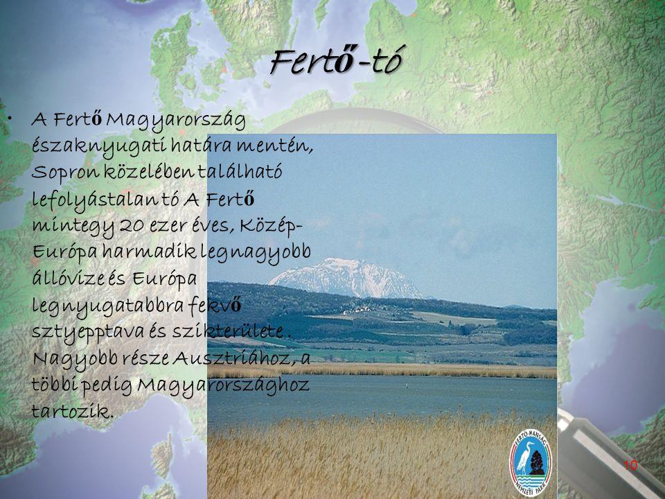 Fertő-tó A Fert ő Magyarország északnyugati határa mentén, Sopron közelében található lefolyástalan tó A Fert ő mintegy 20 ezer éves, Közép- Európa ha
