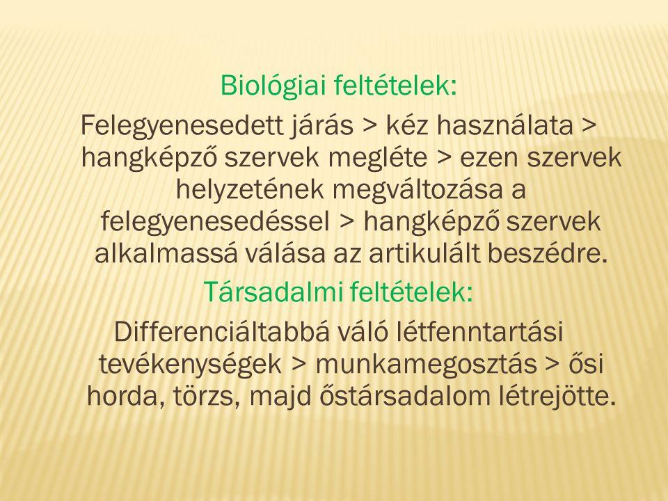 Biológiai feltételek: Felegyenesedett járás > kéz használata > hangképző szervek megléte > ezen szervek helyzetének megváltozása a felegyenesedéssel >