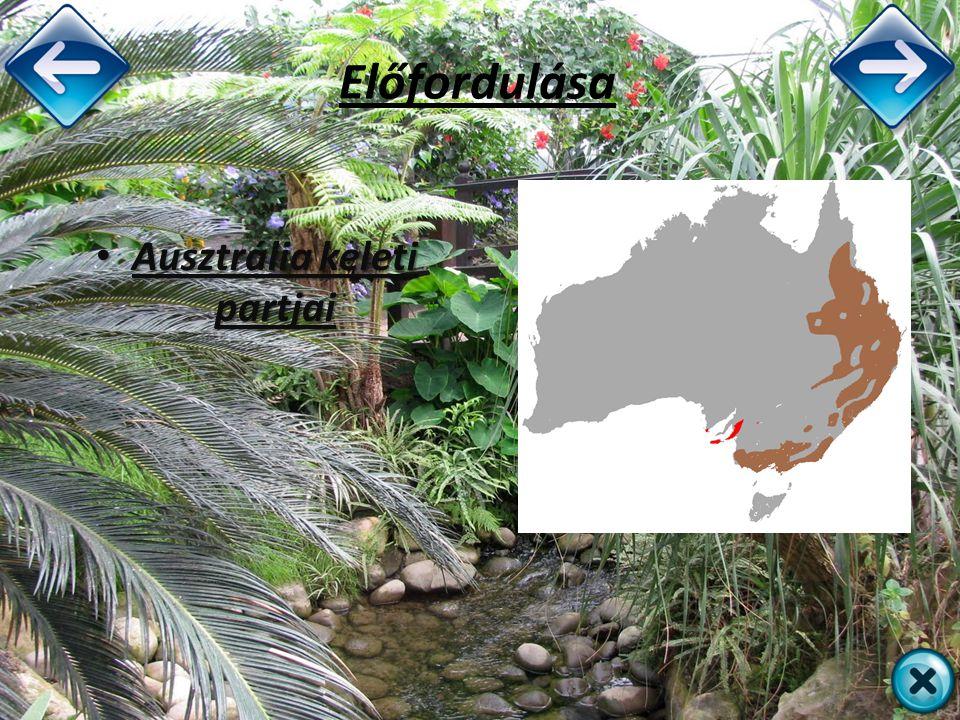 Előfordulása Ausztrália keleti partjai Ausztrália keleti partjai