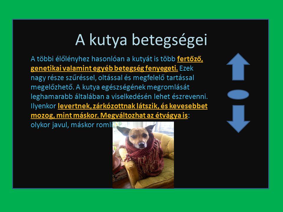 A kutya betegségei A többi élőlényhez hasonlóan a kutyát is több fertőző, genetikai valamint egyéb betegség fenyegeti. Ezek nagy része szűréssel, oltá