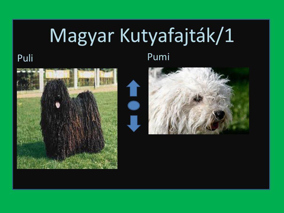 Magyar Kutyafajták/2 MudiKuvasz