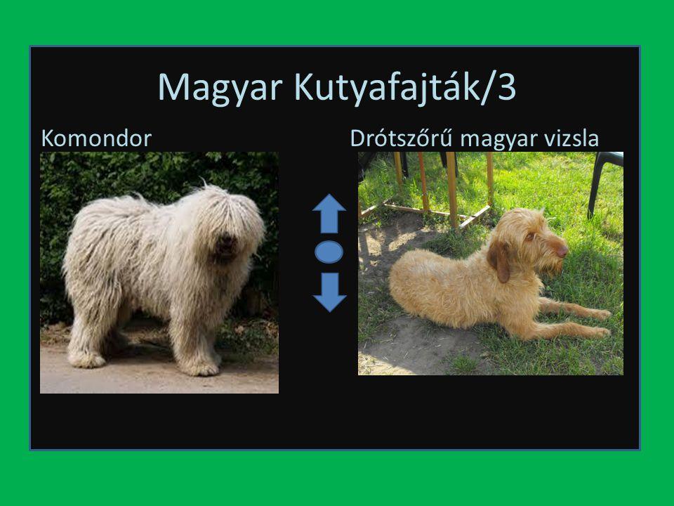 Magyar Kutyafajták/3 KomondorDrótszőrű magyar vizsla