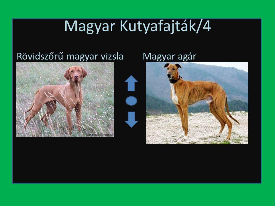 Magyar Kutyafajták/4 Rövidszőrű magyar vizslaMagyar agár