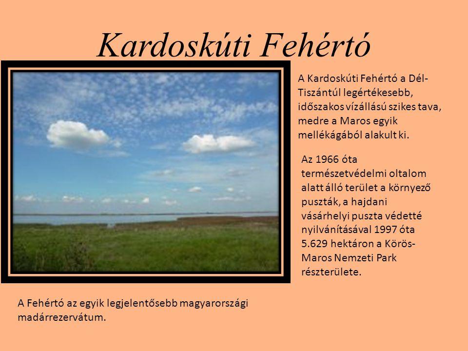 Kardoskúti Fehértó A Kardoskúti Fehértó a Dél- Tiszántúl legértékesebb, időszakos vízállású szikes tava, medre a Maros egyik mellékágából alakult ki.
