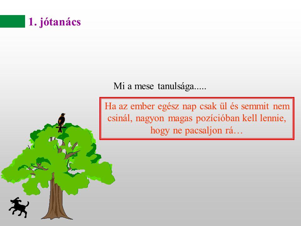 « Fel szeretnék mászni a fára.» suttogott a pulyka...