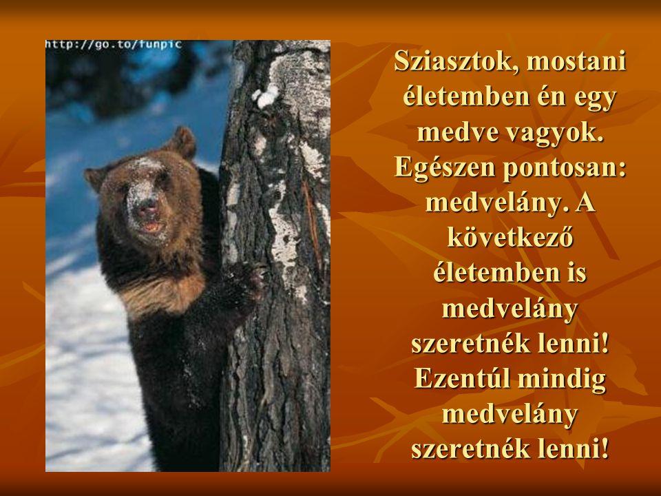 Sziasztok, mostani életemben én egy medve vagyok. Egészen pontosan: medvelány. A következő életemben is medvelány szeretnék lenni! Ezentúl mindig medv