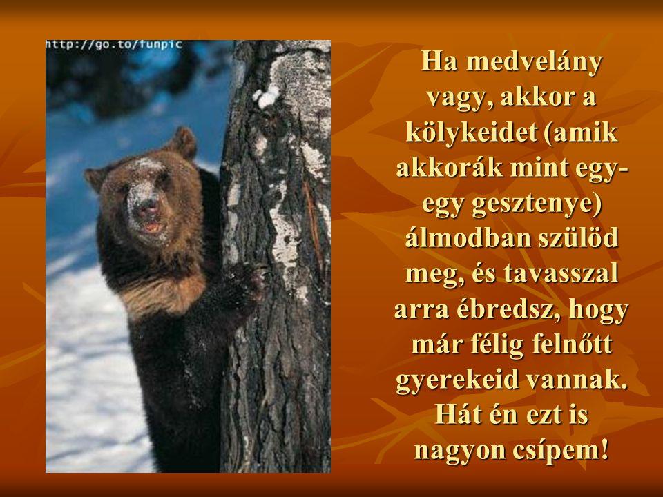 Ha medvelány vagy, akkor a kölykeidet (amik akkorák mint egy- egy gesztenye) álmodban szülöd meg, és tavasszal arra ébredsz, hogy már félig felnőtt gy