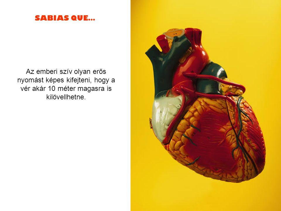 SABIAS QUE… Az emberi szív olyan erős nyomást képes kifejteni, hogy a vér akár 10 méter magasra is kilövellhetne.