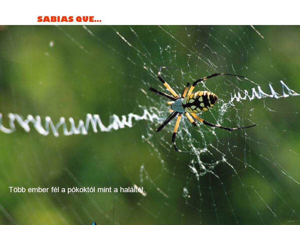 SABIAS QUE… Több ember fél a pókoktól mint a haláltól.
