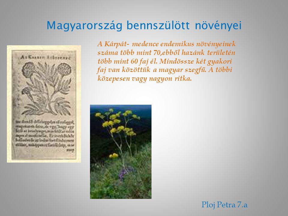 Magyarország bennszülött növényei Ploj Petra 7.a A Kárpát- medence endemikus növényeinek száma több mint 70,ebből hazánk területén több mint 60 faj él