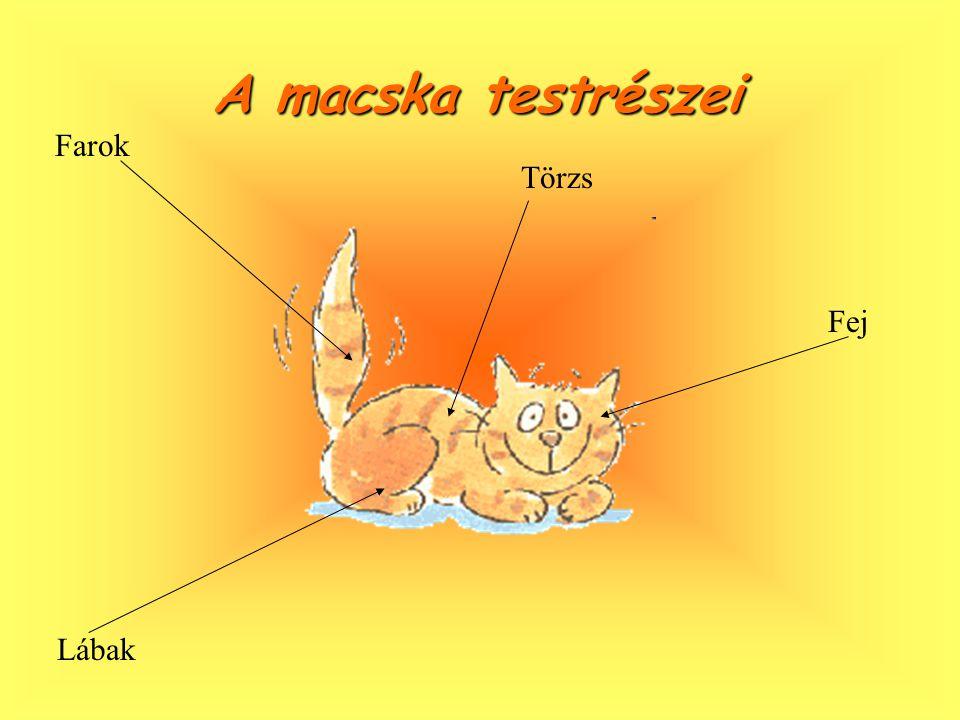 A macska A macska megszólítása Sokféle macska él, igaz, de véleményem róluk az, hogy ha jellemük titka húz, tolmács nélkül is boldogulsz.