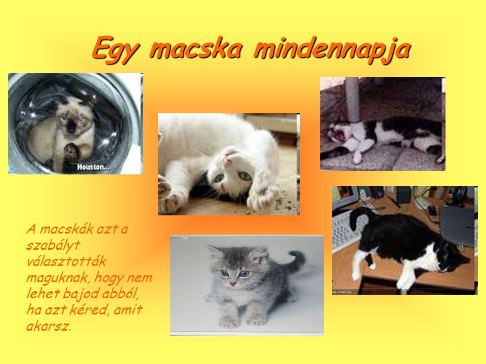 A macska társasága A macskákkal töltött idő soha nem haszontalan.