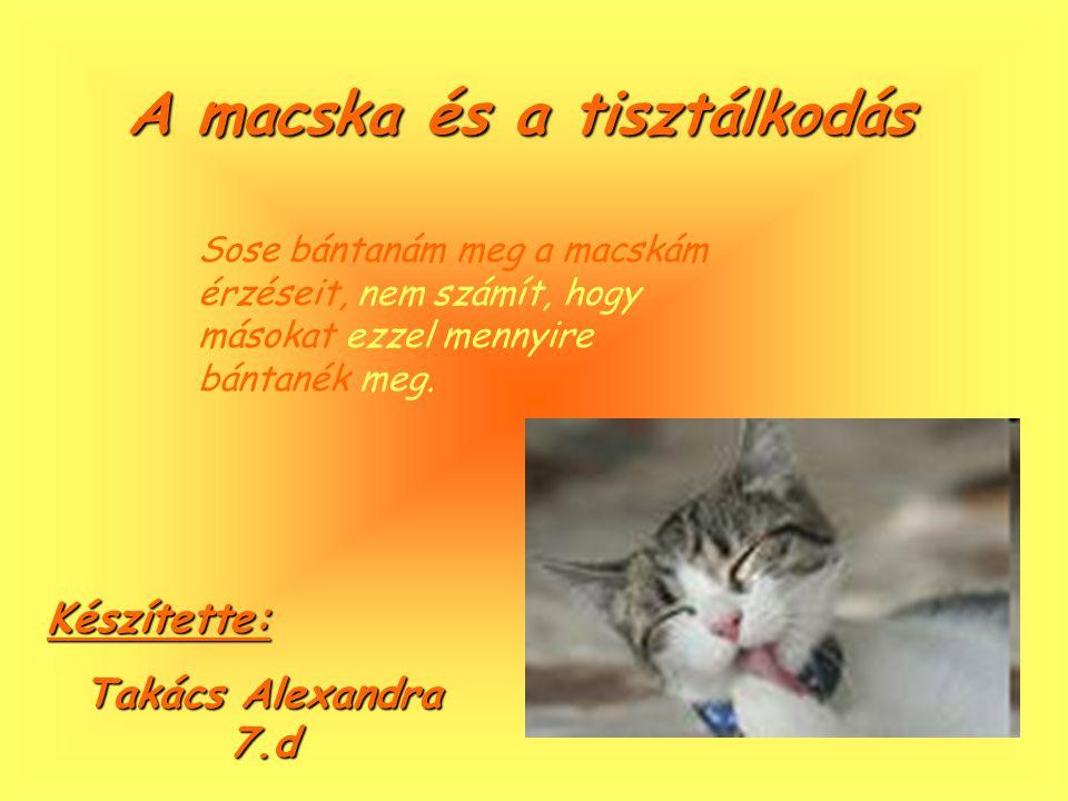 A macska tulajdonságai Az embernek azért van szüksége macskára, hogy félelem nélkül simogathasson egy ragadozót