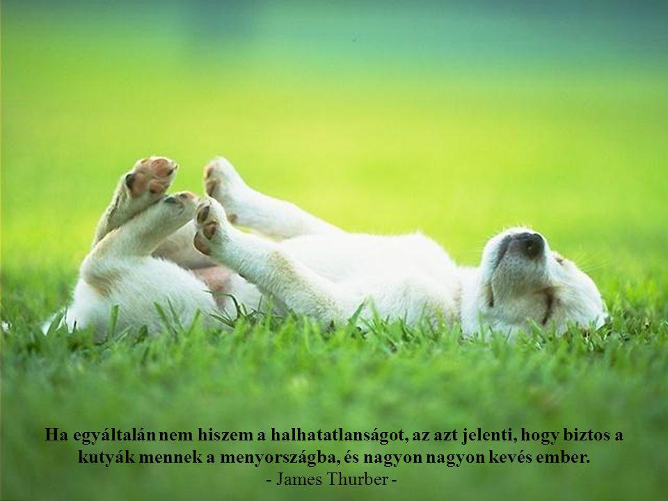 Mindenki, aki nem tudja, hogy ízlik a szappan, soha nem mosdatott egy kutyát sem. - Franklin P. Jones -